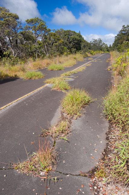 overgrownroad