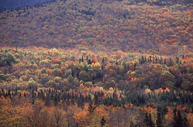 autumnforestnewengland