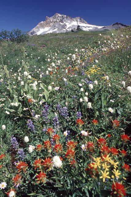 flowermeadowmthood