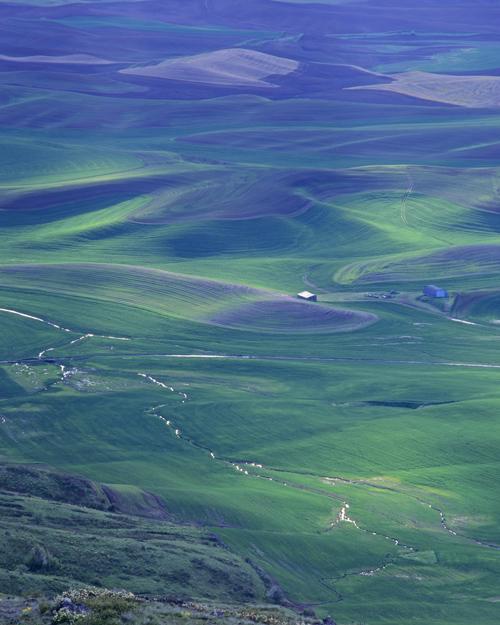 wheatfieldinspringstream